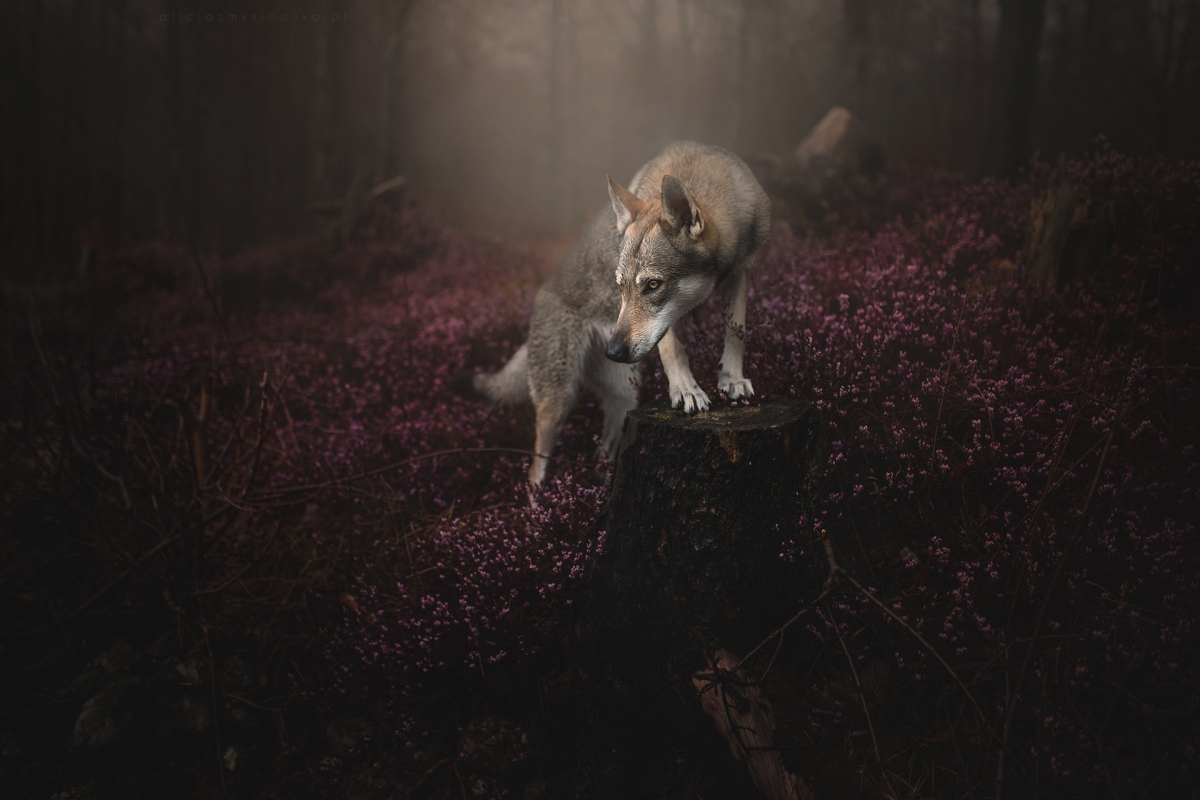 © Alicja Zmysłowska Photography